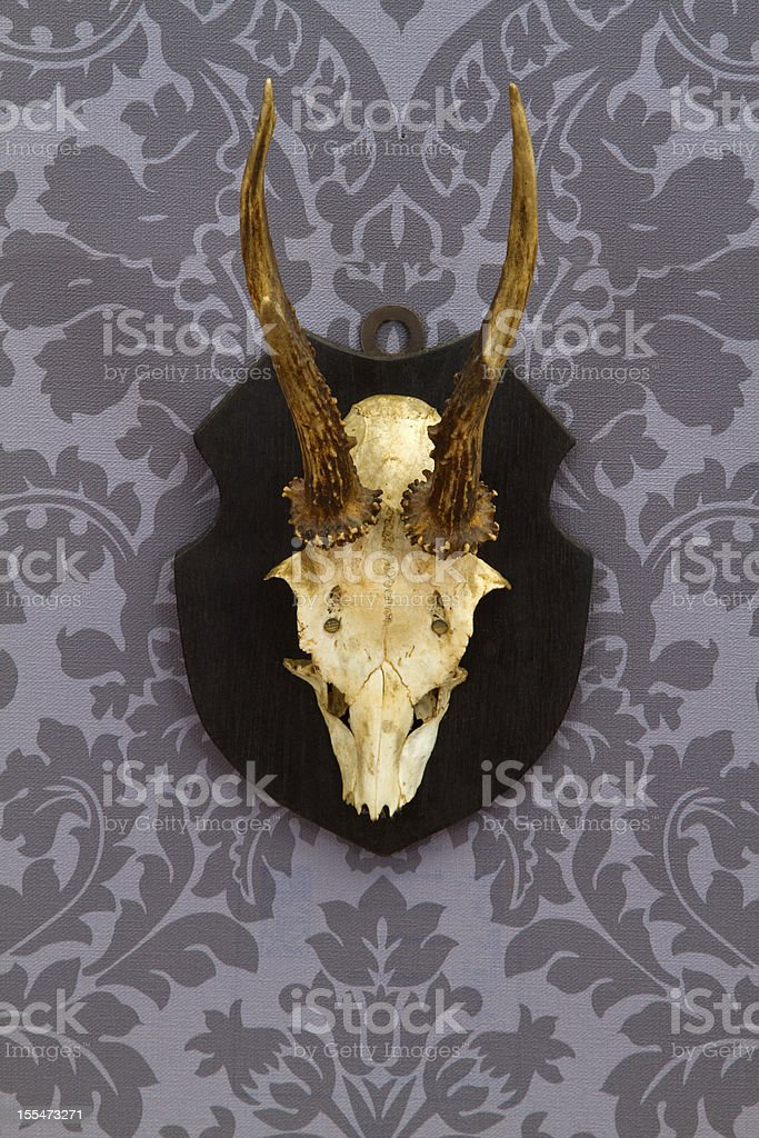 Old antlers royalty-free stock photo