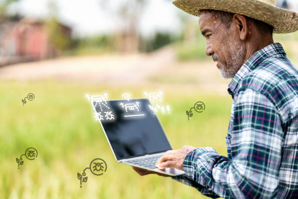 old asian farmer is choosing program pest control with drone by computer laptop. asia man is monitoring pest with digital technology in smart farm. internet of thing, agriculture and smart farming. - defection stock photos and pictures