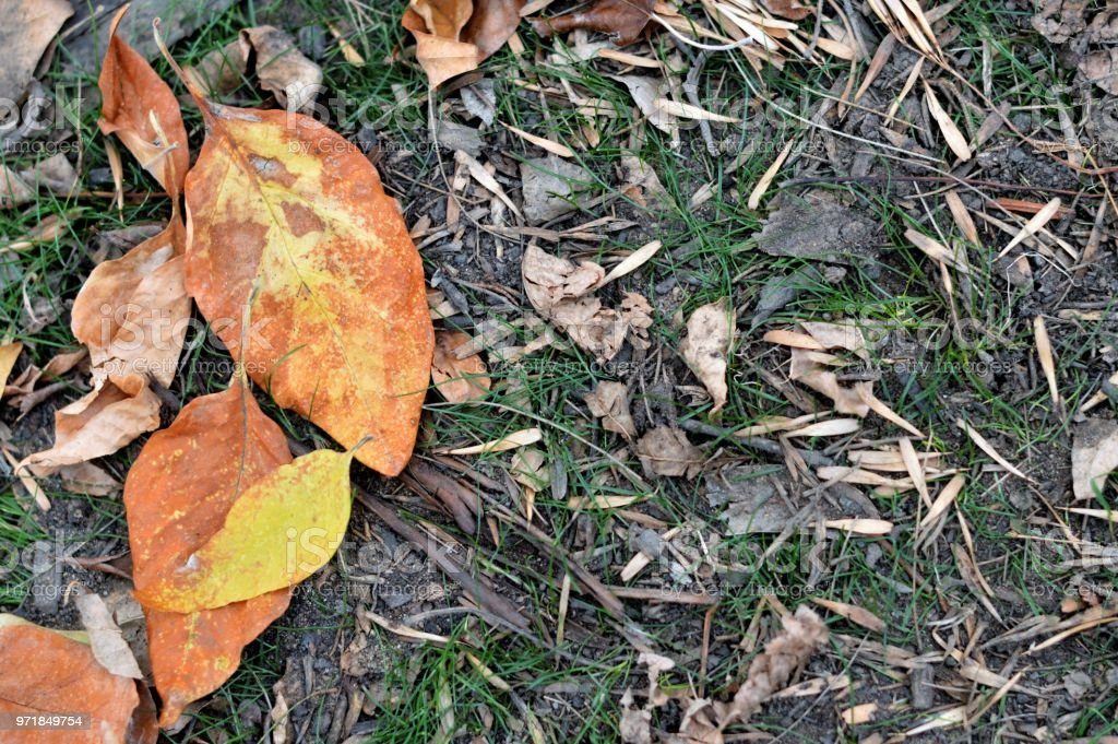 Old autumn leaves - background stock photo