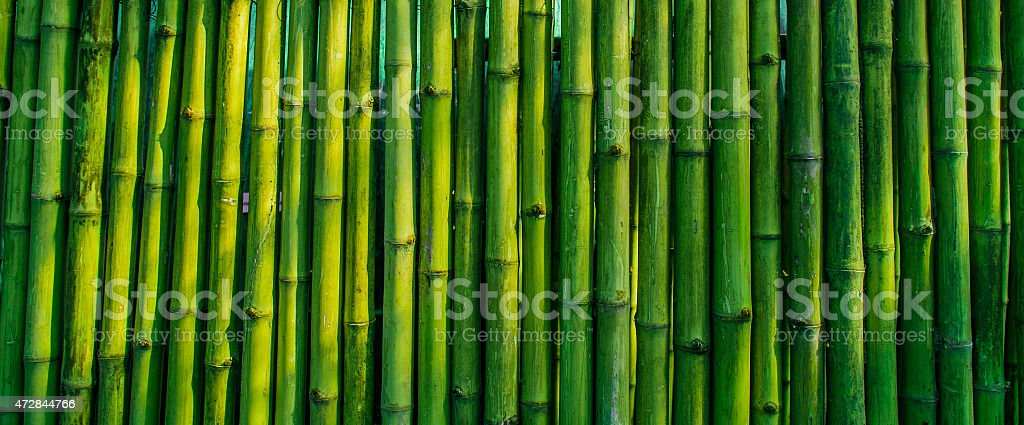 old bamboo fence background stock photo