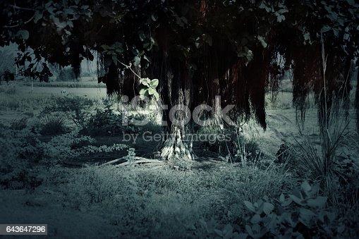 istock Old Banyan Tree 643647296