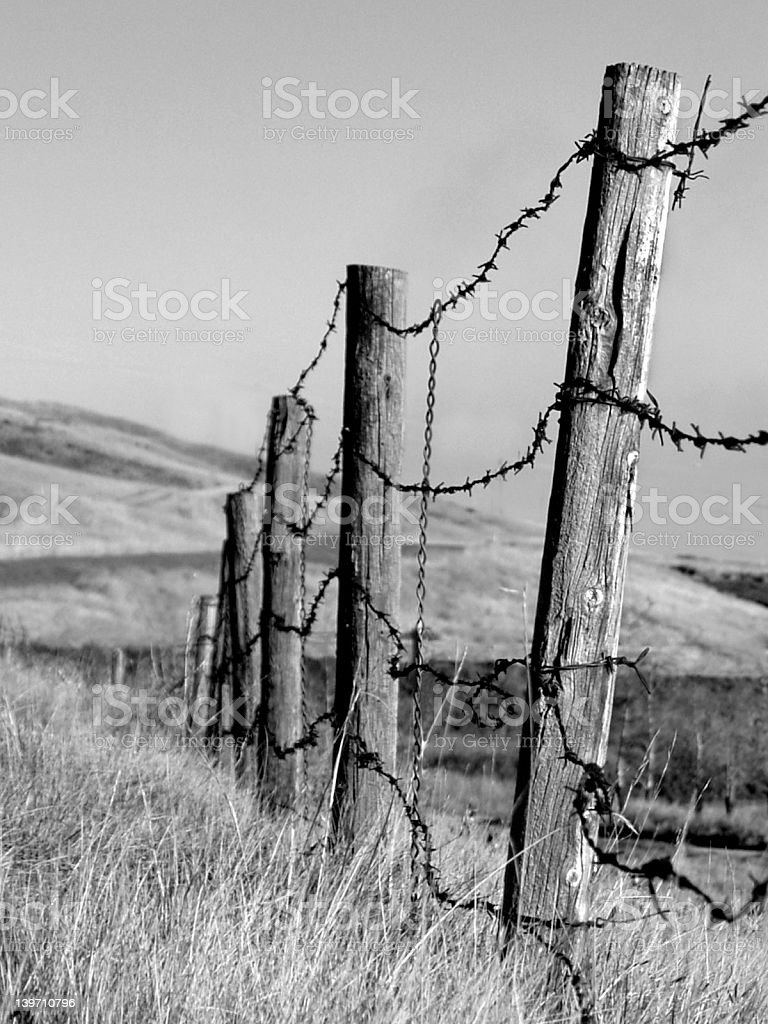 Old Barbed Wire Fence Stock Photo More Pictures of Agriculture