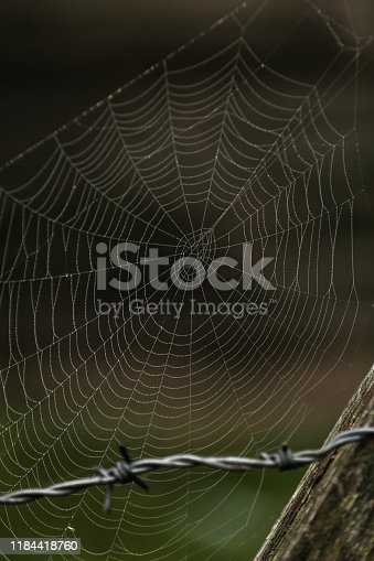 old barbed wires and spider web