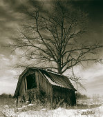 Old barn and tree in a winter landscape.CLICK BELOW TO SEE MORE IN THIS SERIES: