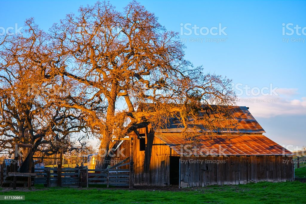Old barn at sunset stock photo