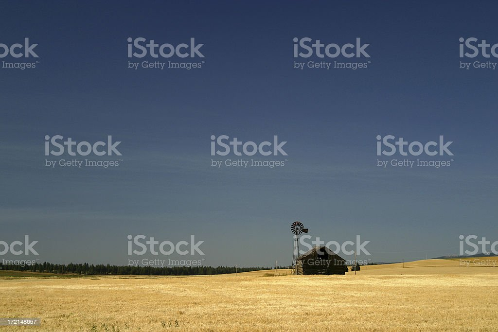 Old Barn in Wheatfield - Fall royalty-free stock photo