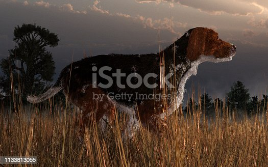 An old beagle stands in a field of long grass.  This dog is no puppy, but an old experienced hound perhaps out hunting with its owner. 3D Rendering
