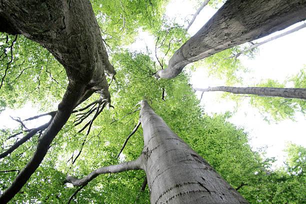 Old Buche forest – Foto
