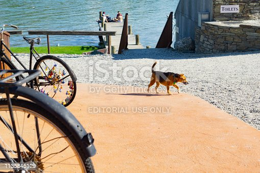 Old bicycle wheels and dog crossing street in small town with group four youth in distance on jetty on Lake Dunstan October 2018 Cromwell New Zealand