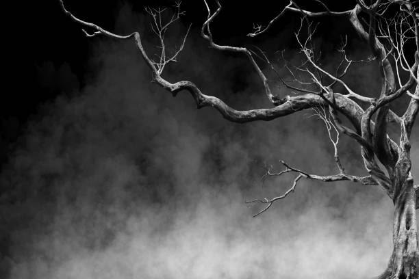 Old Big Giant Tree alone on fog and smoke background, Black and White Color stock photo