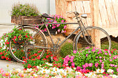 Old bike and decorated with flowers, in a beautiful garden.