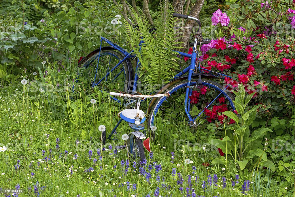 Old bike between flowers in a garden with three wheeler royalty-free stock photo