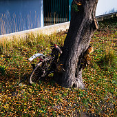 istock Old bike parked against a tree 1285526107