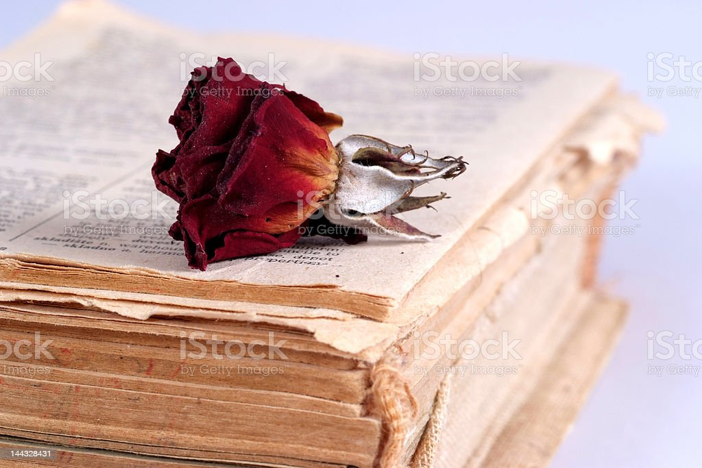 Old book and a dried rose royalty-free stock photo