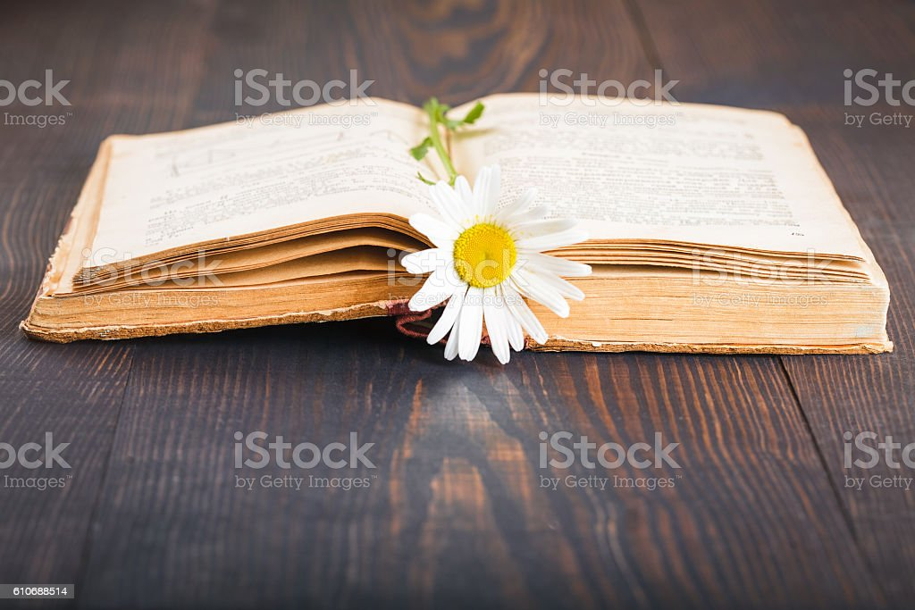 Old book and daisies flower stock photo