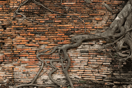 istock old brick wall in the forest with root tree ancient temple background 936319350