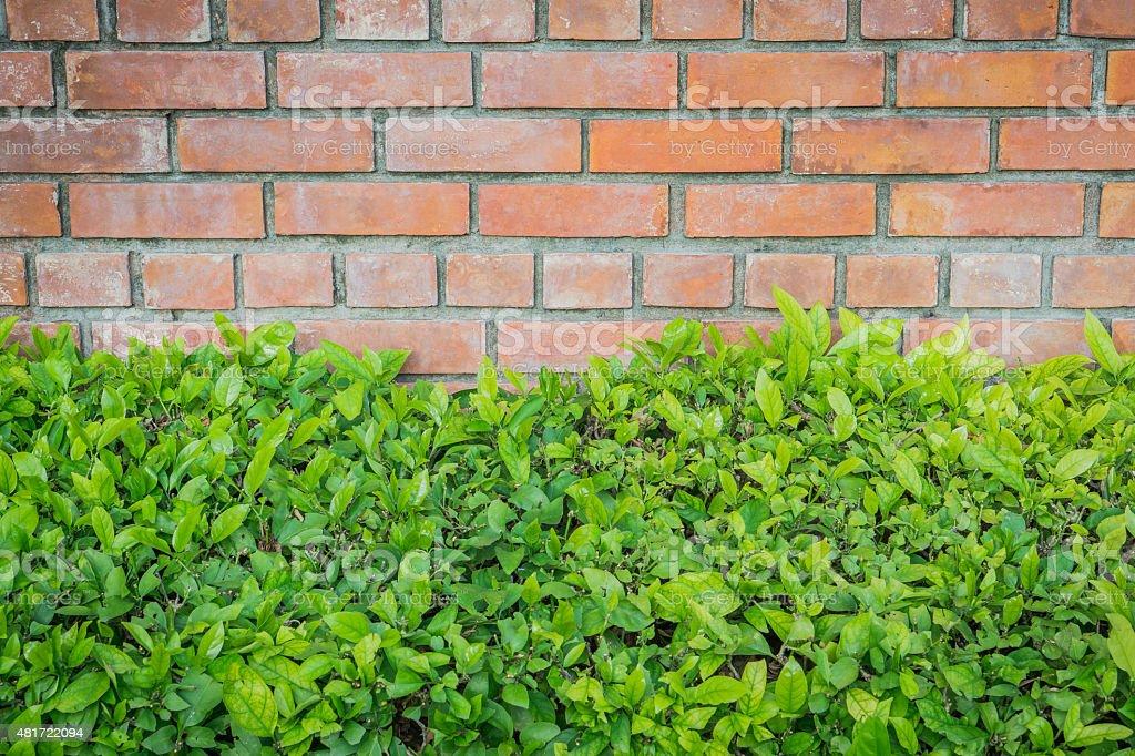 Old brick wall with bush stock photo