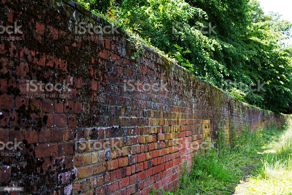 Old brick wall with moss and ivy growing on it foto royalty-free