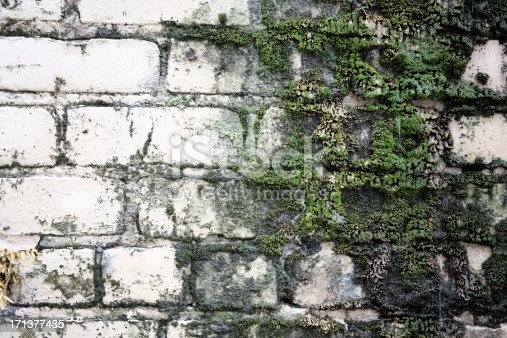 A grungy old brick wall in New Orleans with stains and moss growing on it.