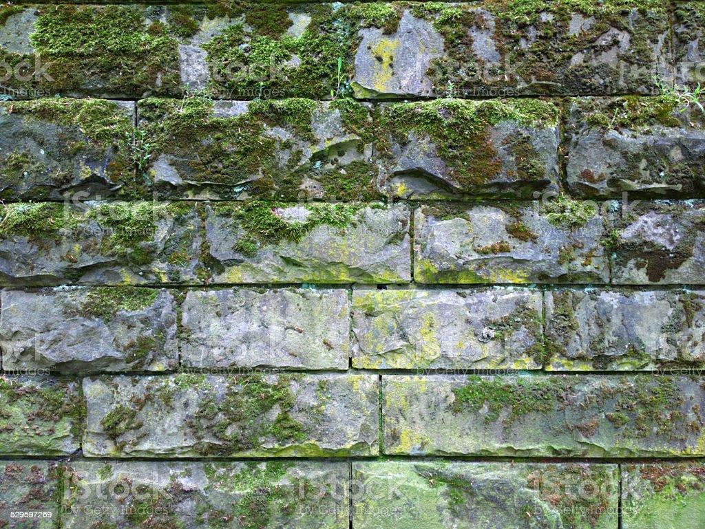 Vecchio muro di mattoni con muschio fotografie stock e altre