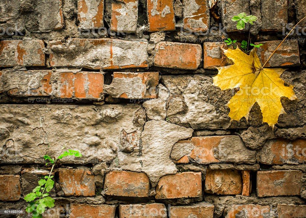 old bricks with a yellow autumn leaf Lizenzfreies stock-foto