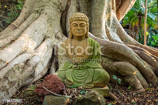 Old buddha statue meditation religious symbol at roots