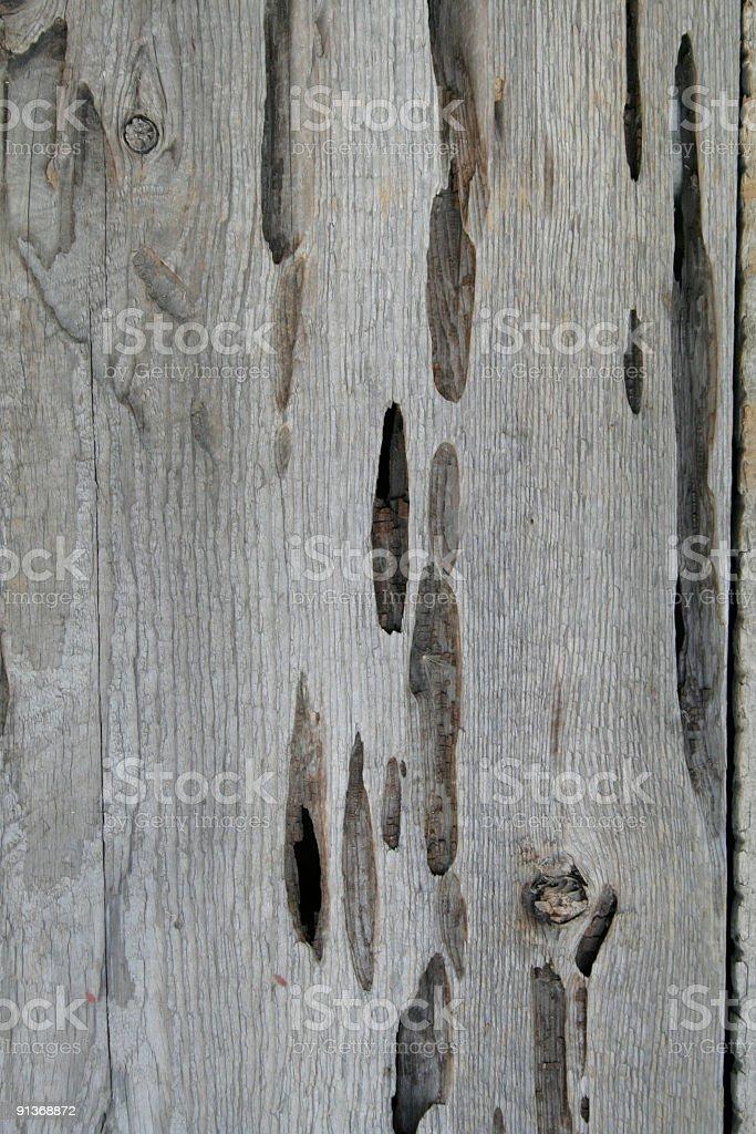 Old bug-eaten, worn wood texture royalty-free stock photo