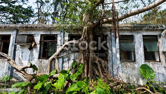 Old building wall with tree trunk.