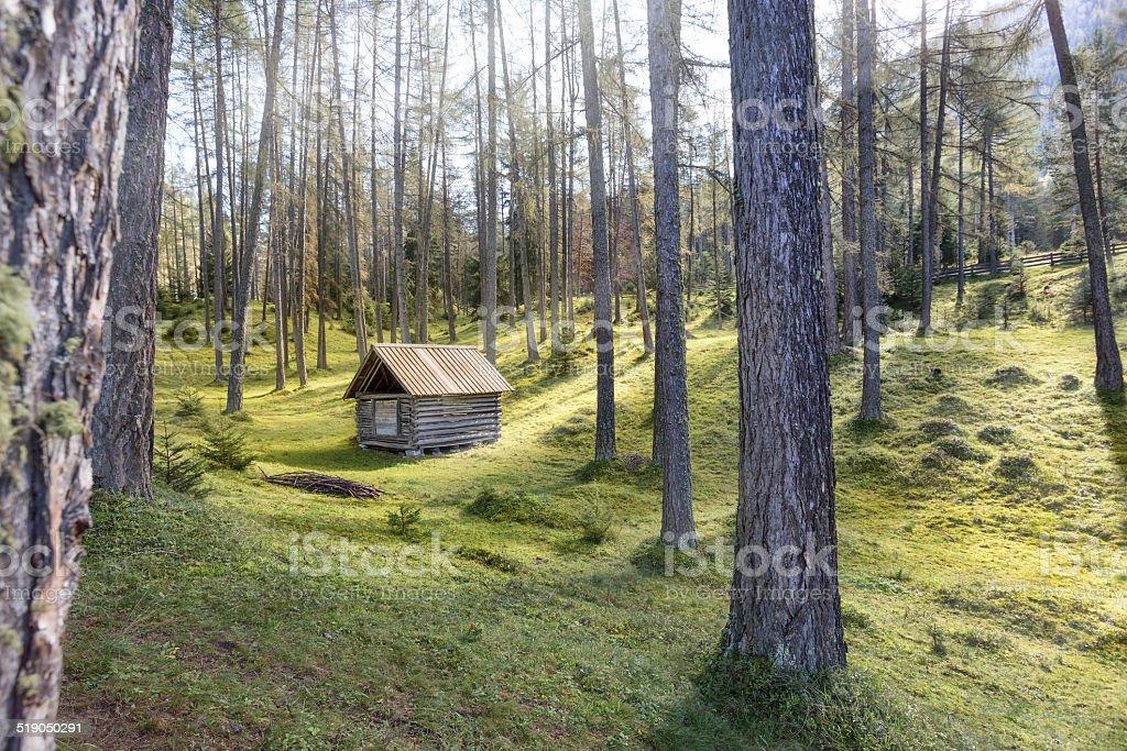 Old Cabin in forest alerce europeo - foto de stock