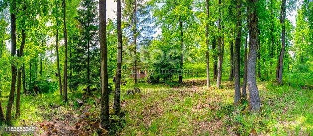 Dobogoko Hungary Jun 21, 2019:  Old cabin hidden in the woods in the late spring.