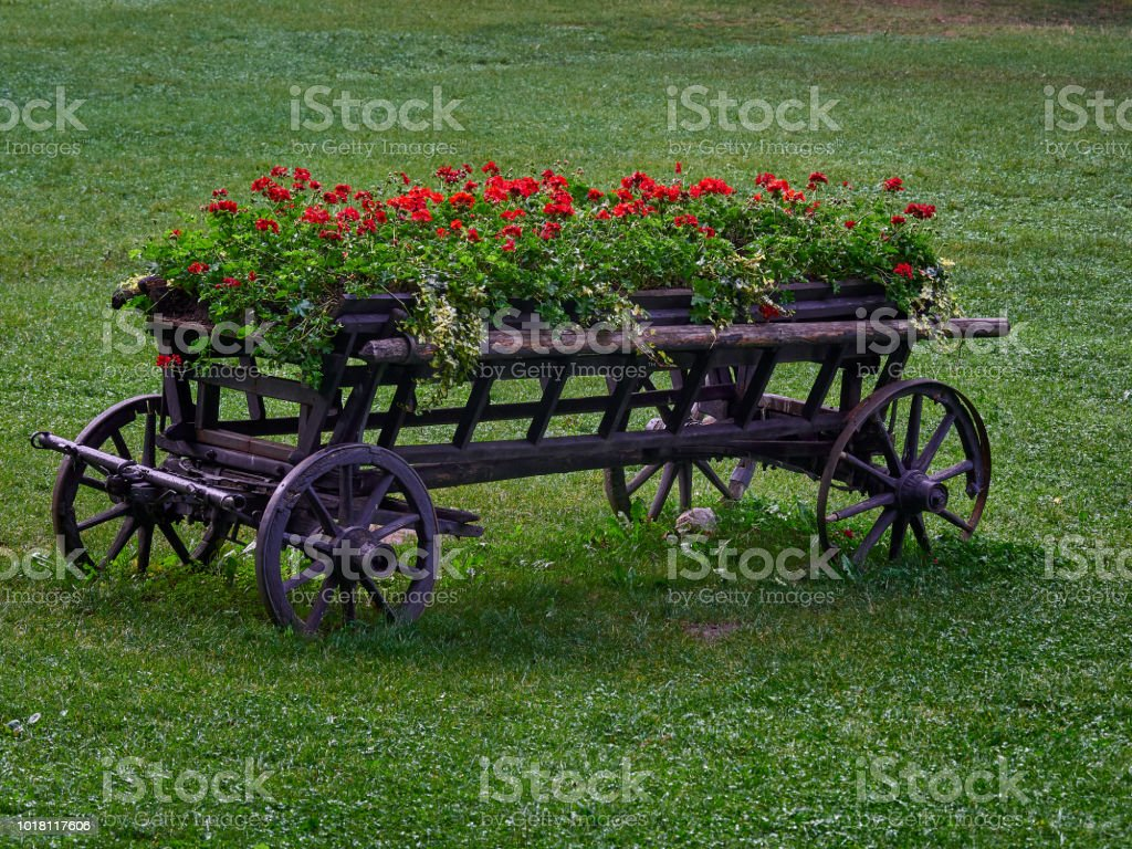 Old carriage  holding flower pots filled with red geraniums stock photo