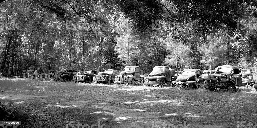 Old cars resting and rusting under the trees shadow stock photo