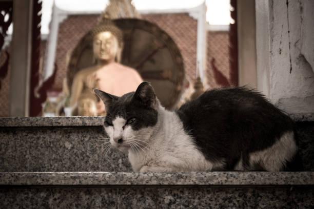 Old cat. stock photo