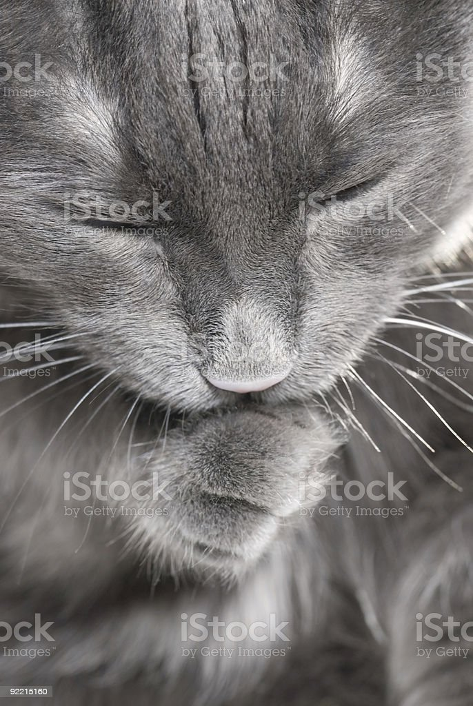 Old cat stock photo
