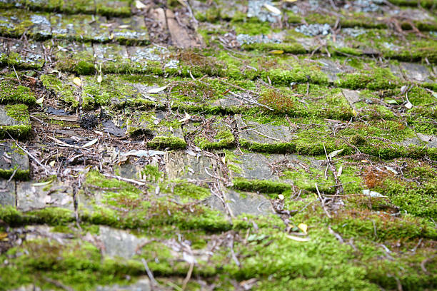 Old Cedar Roof Shingles Covered in Moss stock photo