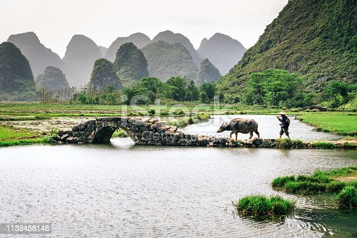 Old chinese farmer with buffalo against rice field  Yangshuo, China