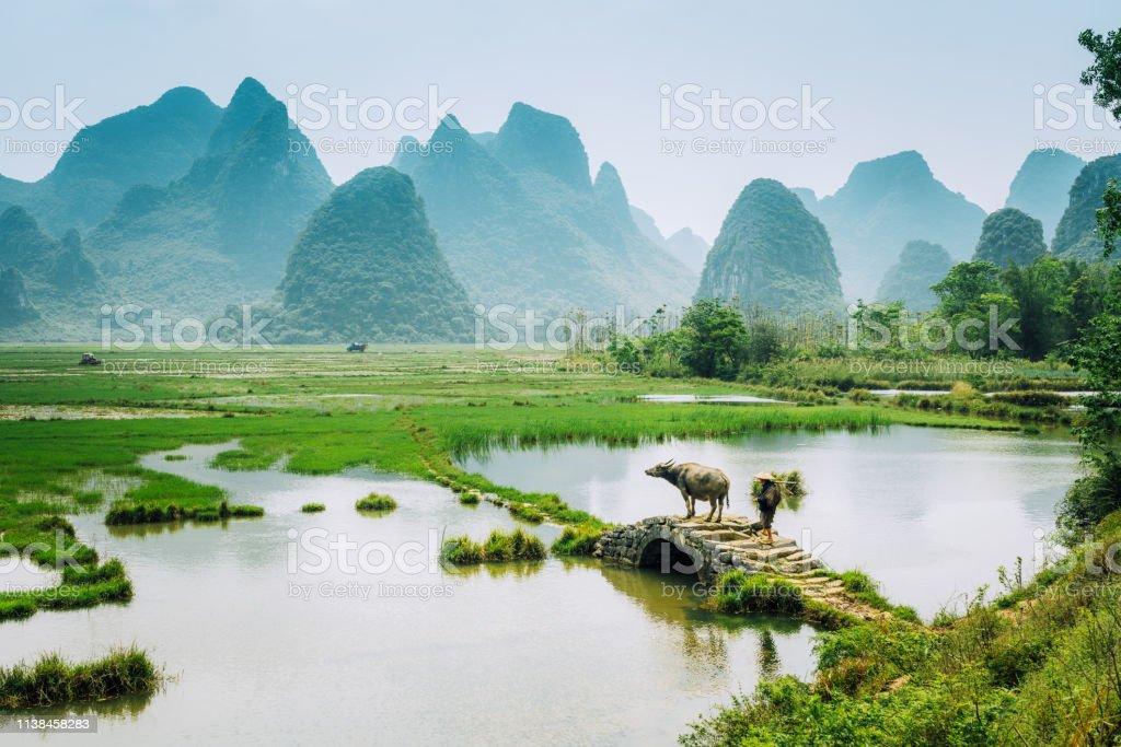 Alter chinesischer Landwirt mit Wasserbüffel gegen Reisfeld - Lizenzfrei 65-69 Jahre Stock-Foto