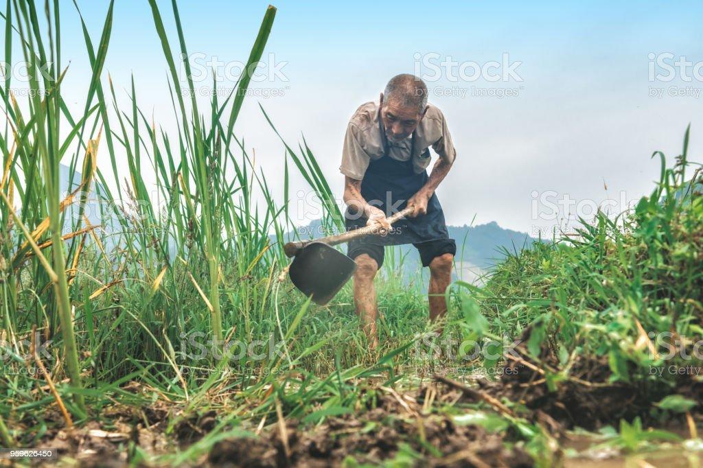 viejo granjero chino trabajando en campo del arroz de Guilin - Foto de stock de 80-89 años libre de derechos