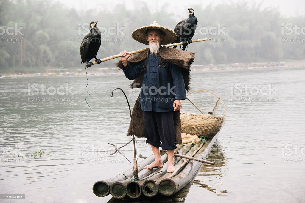 Old chinese fisherman on wooden raft together with grey herons stock photo
