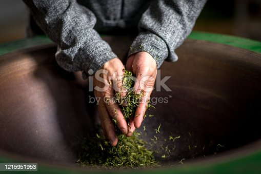 old chinese man makes longjing green tea in tea plantation