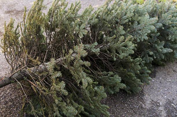 Old Christmas Tree stock photo