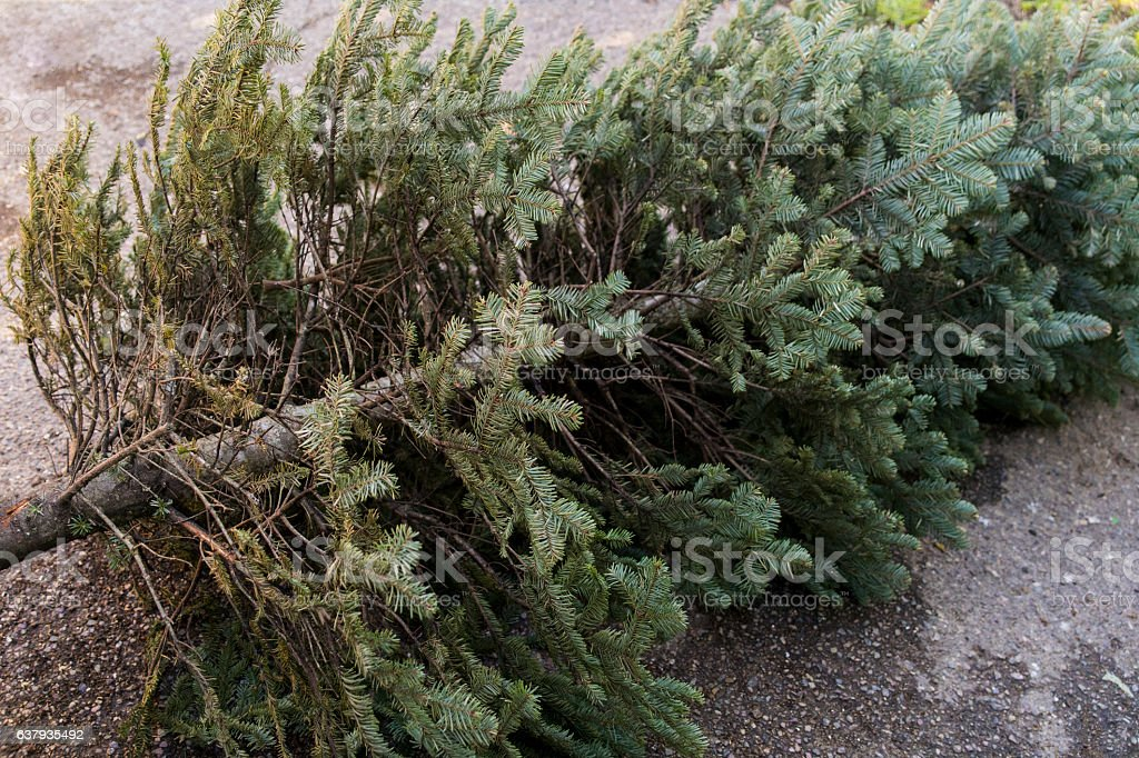 Old Christmas Tree stock photo