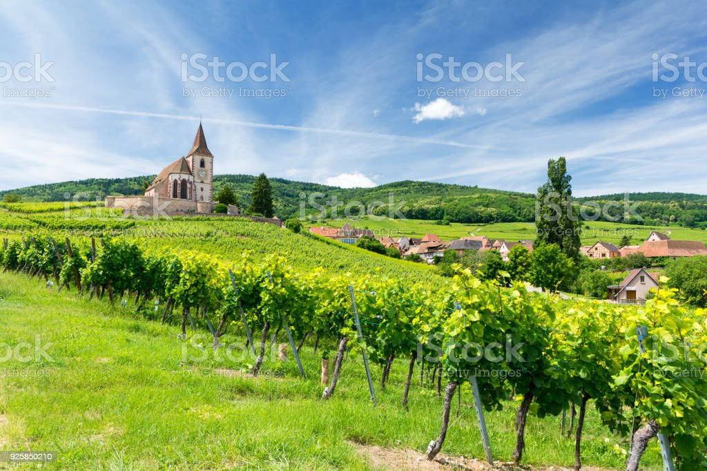Old church and vineyards in Hunawihr village in Alsace, France - foto stock
