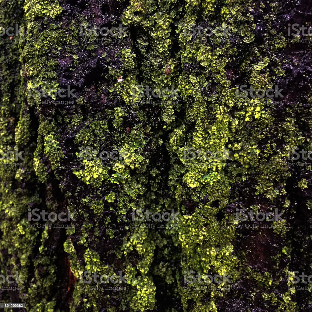 Old city park tree close-up royalty-free stock photo