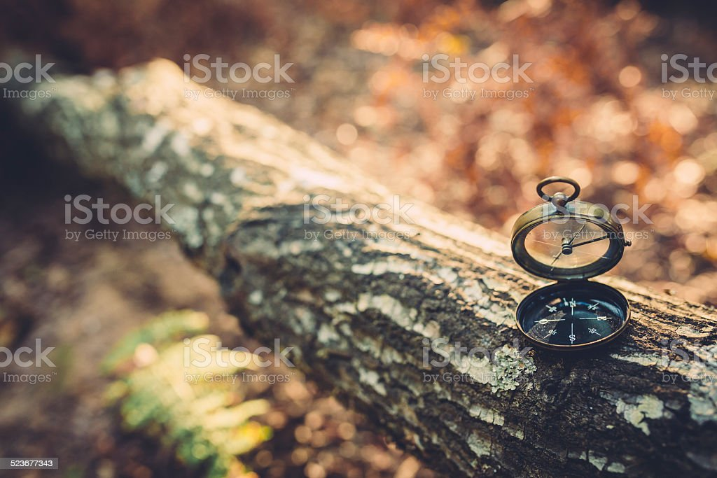 Old Compass on the tree trunk stock photo