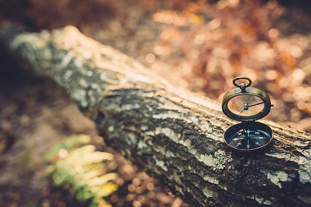 Alte Kompass auf die tree trunk – Foto