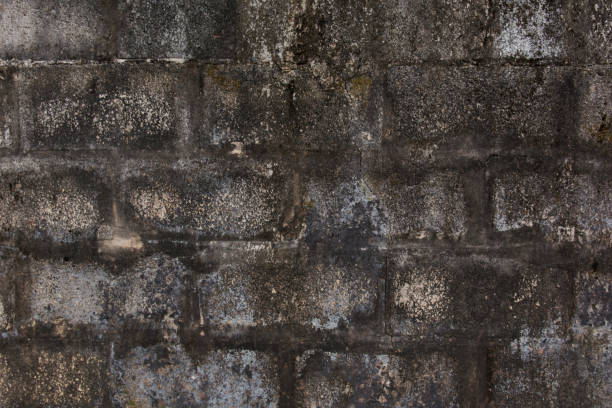 Royalty Free Black Mold On Concrete Pictures Images And