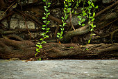 Old concrete floor in front of old root wall background