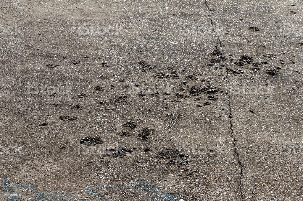 Old concrete (stone) road. On the surface cracks and defects. stock photo