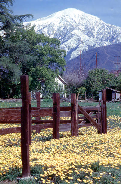 Old corral and spring flowers in vacant lots near Mentone and Redlands California Old corral and spring flowers in vacant lots near Mentone and Redlands California redlands california stock pictures, royalty-free photos & images